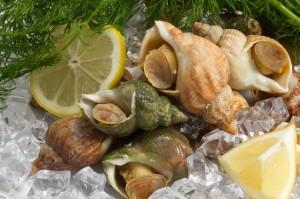 Ốc Bulot Pháp: Từng chả ai ăn, dùng làm mồi cho cá đến chỗ trở thành thực phẩm đắt cả nửa triệu bạc vẫn