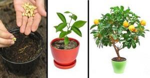 5 loại cây ăn quả trồng từ hạt