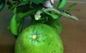 Điên người vì mua hoa quả liền cành đẹp về thắp hương dịp Tết lại rước phải hàng dính keo 502