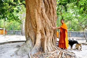 """Chiêm ngưỡng 2 """"đại lão"""" vải thiều hơn 300 tuổi giữa rừng Thất Sơn"""