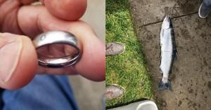 Ngỡ ngàng khi bắt được cá hồi đeo nhẫn, người đàn ông đăng đàn rồi tình cờ biết được câu chuyện về món đồ nguyền rủa của chủ nhân chiếc nhẫn