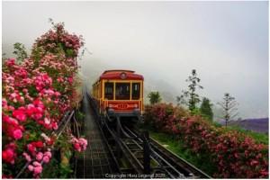 Kỷ lục thung lũng hoa hồng lớn nhất Việt Nam tại Sapa có gì đặc biệt?