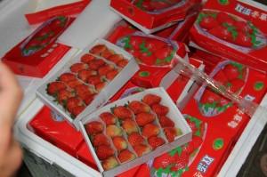 8,3 tấn dâu tây Trung Quốc nhập nhèm dâu tây Đà Lạt bị bắt giữ