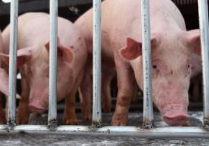 Mua thịt lợn nhập khẩu Thái Lan ở đâu?