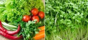 Cảnh báo lý do rau xanh, rau mầm rất dễ gây ngộ độc