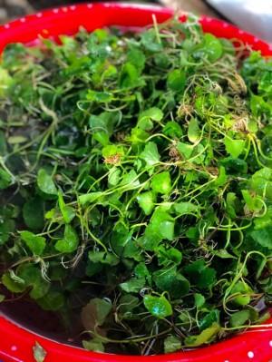 Ngạc nhiên loại rau dại mọc đầy ven đường lại chế biến được thành loạt món ăn gây thương nhớ, ăn tươi hay nấu chín đều ngon
