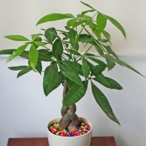 8 loại cây cảnh để bàn làm việc cực dễ chăm sóc mà lại đẹp lung linh