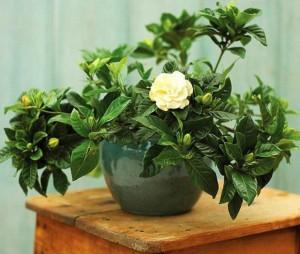 7 loại cây nên trồng trong nhà vào mùa đông