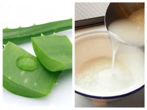 5 cách tự chế mặt nạ tự nhiên từ nha đam và nguyên liệu sẵn có trong bếp