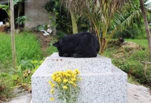 Xúc động chuyện con chó nằm canh mộ phần cậu chủ 2 tuổi suốt 3 năm ở Long An