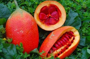 5 thực phẩm hàng ngày có tác dụng cực tốt trong phòng chống ung thư