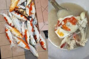 Đàn cá koi lăn ra chết, nữ chủ nhân vì tiếc tiền nên quyết định đem tất cả đi... nấu súp, pha xử lý khiến dân mạng