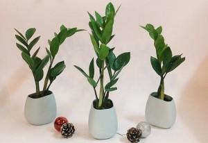 4 loại cây phong thủy mang may mắn, tài lộc cho gia chủ