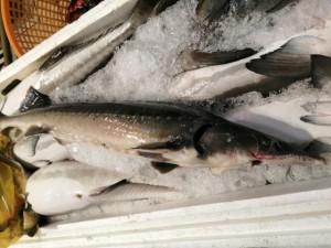 Tổng cục Hải quan yêu cầu kiểm soát chặt cá tầm Trung Quốc nhập khẩu