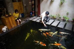 Thú chơi sưu tầm cá Koi tiền tỷ: Hoa mắt bởi độ chăm sóc kỳ công