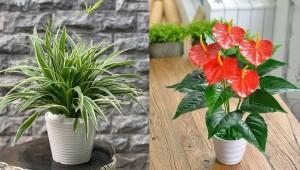 13 loại cây lọc không khí nên có trong nhà