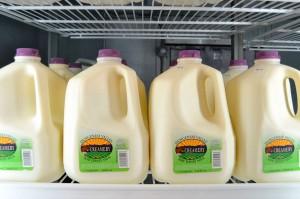 Có nguy cơ nhiễm khuẩn campylobacter cao, một lượng lớn sữa của Mỹ bị thu hồi