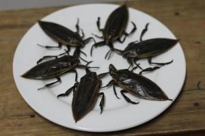 Đại gia Việt chi 3,5 triệu đồng để ngâm lọ mắm côn trùng nhìn giống gián