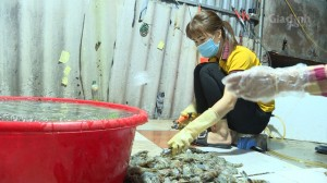 Kinh hoàng tiểu thương ở Hà Nội bơm tạp chất vào tôm để tăng trọng lượng, thu lãi khủng