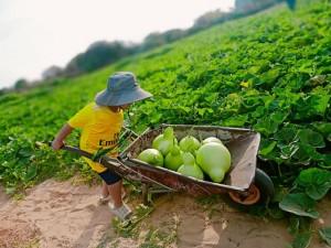 Thân thương thứ quả quê mùa được tận dụng lại biến thành món ngon khó cưỡng, ăn 1 miếng, nghiền cả đời