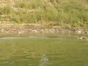 Kinh khủng: Ấn Độ phát hiện hàng chục th.i th.ể nạn nhân Covid-19 trôi trên sông Hằng