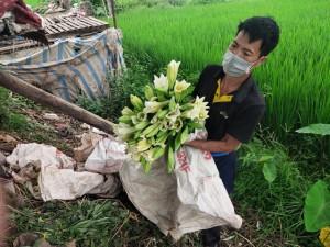 Người dân trồng hoa Thường Tín khóc ròng khi hoa đến vụ phải