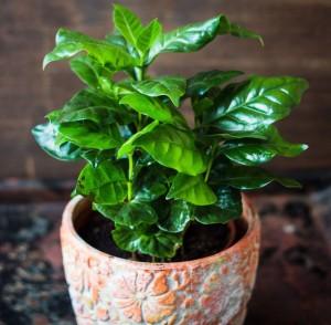 Những loại cây cảnh bạn có thể tự tin trồng để làm đẹp nhà dù không biết cách chăm sóc