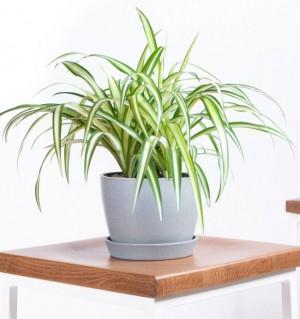9 loại cây cảnh trồng trong phòng giúp bạn có giấc ngủ ngon hơn