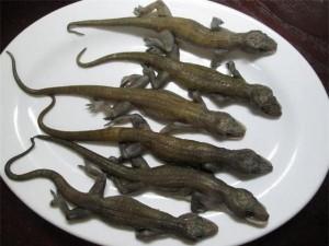 Đặc sản từ một loài vật kinh dị, bất ngờ là hương vị lại thơm ngon