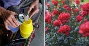 6 loại nước bạn đừng nên bỏ phí mà hãy dùng tưới cây ngay, đảm bảo cây lớn nhanh như thổi
