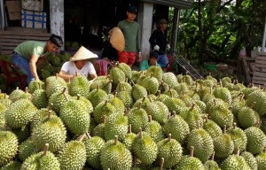 Sầu riêng rớt giá kỷ lục, Đắk Lắk khẩn trương xây dựng kế hoạch tiêu thụ