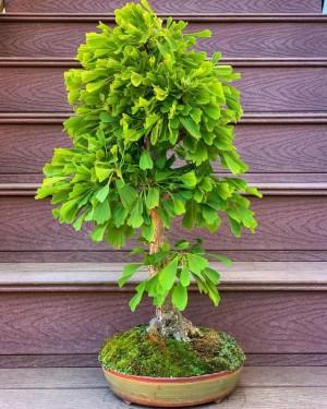 7 loại cây giúp cải thiện sức khỏe hiệu quả khi trồng trong nhà