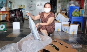 Hàng nghìn tấn tôm, cá ế đầy kho: chủ hàng lao đao lo phá sản