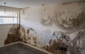 Không cần dùng một giọt nước, bức tường trắng bị mốc ở nhà ngay lập tức như mới
