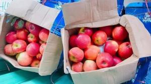 Táo đá Trung Quốc giòn, ngọt, giá siêu rẻ, dân buôn bán gần chục tấn táo mỗi ngày