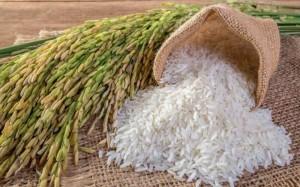 Giá gạo tiếp tục tăng