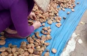Quy trình sơ chế ô mai, xí muội bẩn ở Hà Nội