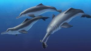 Tìm thấy hóa thạch tổ tiên loài cá heo?