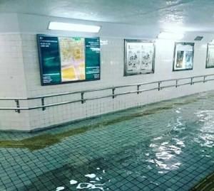 Tranh cãi về bức ảnh dòng nước lũ trong veo ở Nhật Bản