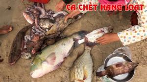 Formosa và cá biển chết