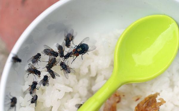Giật mình 9 căn bệnh khủng khiếp từ con ruồi có thể gây ra cho con người