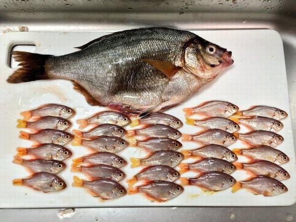 Hai mẹ con đi chợ mua cá, về nhà mổ mới tá hỏa khi dùng tay ấn vào bụng cá