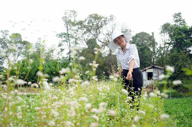 Ngỡ ngàng hoa tam giác mạch ở Hà Giang khoe sắc tại Sài Gòn