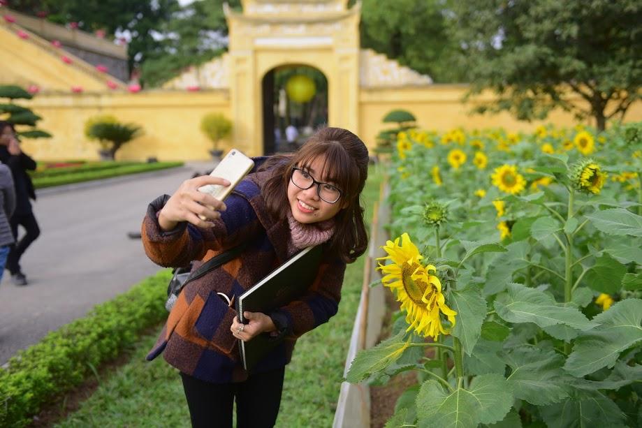 Vườn hoa hướng dương ở Hoàng Thành Thăng Long: Món quà rực rỡ từ TH true Milk