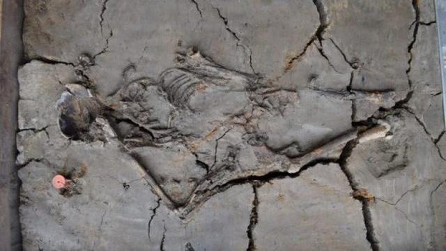 Các nhà khảo cổ học đã phát hiện một ngôi mộ trẻ em cổ nhất từng được tìm thấy ở Hà Lan