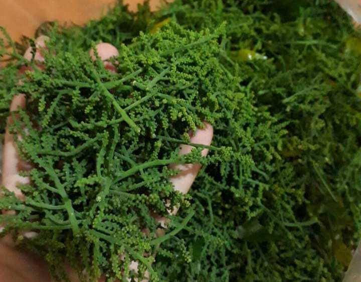 Hoa ngót rừng giá