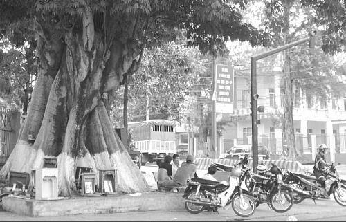Quan niệm 'quỷ cây đa ma cây gạo' và tục đóng đinh vào thân cây