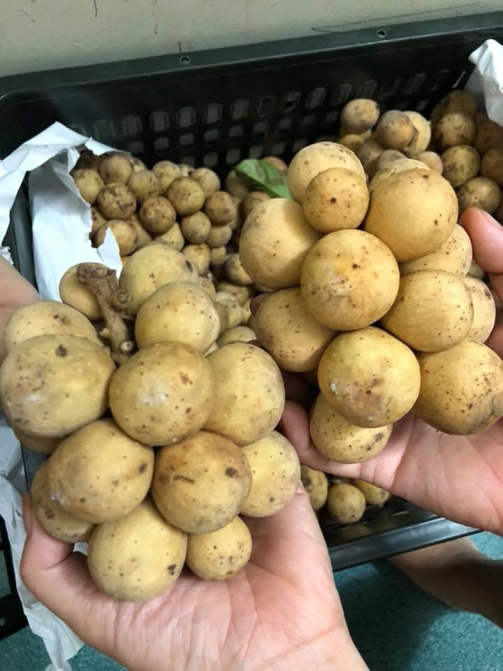 Bòn bon đầu mùa rẻ như cho ở TP.HCM nhưng lại đắt đỏ hơn trái cây nhập khẩu ở Hà Nội