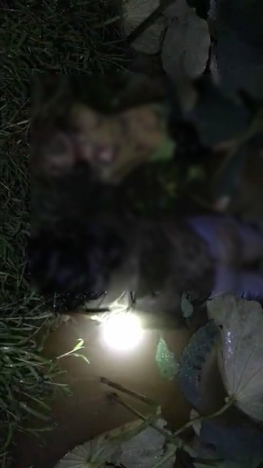 Theo miêu tả thì có 2 thi thể người được phát hiện