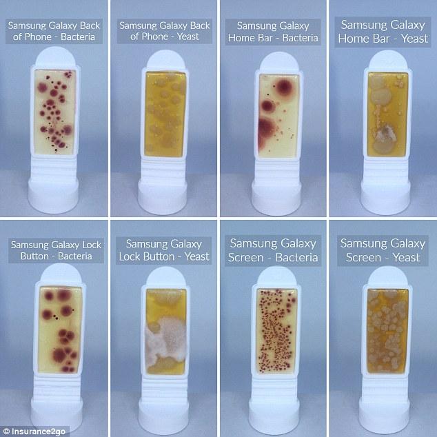 Điện thoại thông minh nhiễm nhiều vi khuẩn kinh hoàng